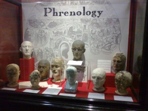 The Phrenology display, Cabinet of Curiosities room, Swansea Museum