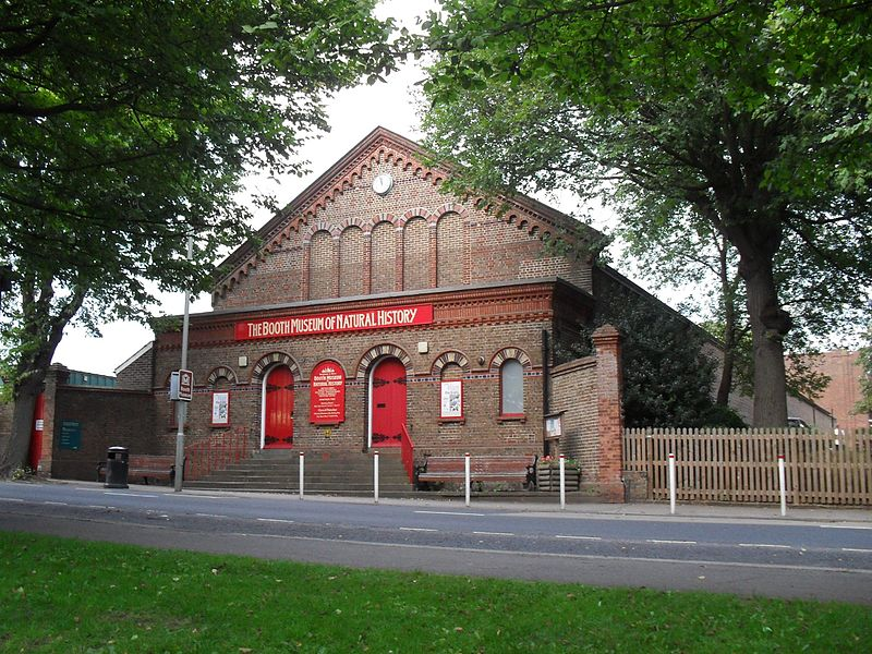 The Booth Museum of Natural History on Dyke Road