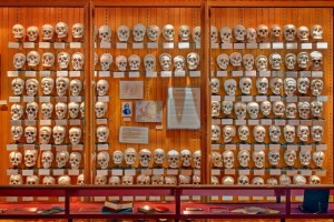 The Hyrtl Skull wall